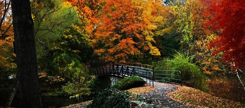 Esmond Park in the fall. Photo by Elyse Major.